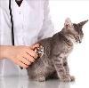 Ветеринарные клиники в Кушве
